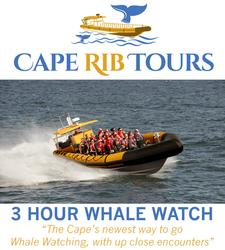 Cape Rib Tours is offering 20% OFF a Three-Hour Whale Watch tour out of Cape Cod Bay