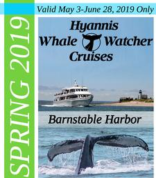 SPRING SHOULDER SEASON - Hyannis Whale Watcher Cruises in Barnstable Harbor is offering 21% OFF an Adult Ticket