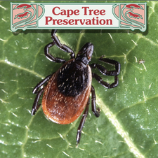 NEW CLIENT SPECIAL: Save 50% on an APRIL 2021 ORGANIC Tick Control Application from Cape Tree Preservation